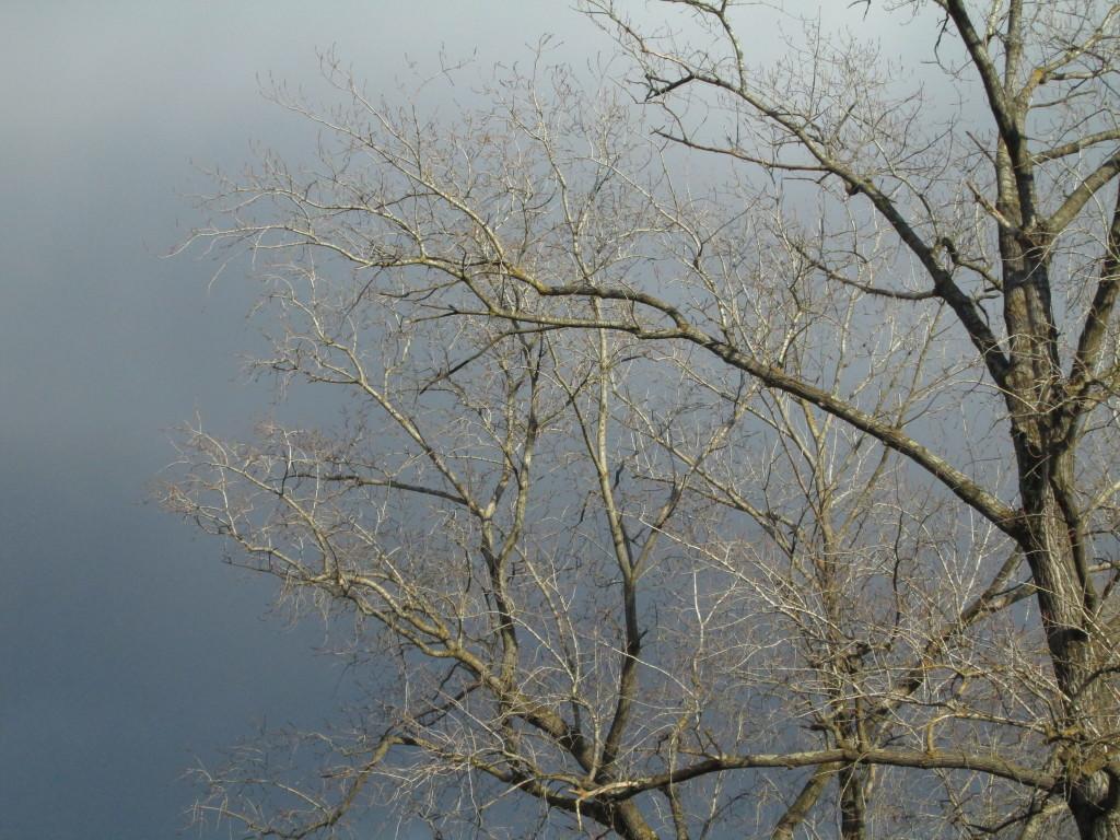 Albero-nuvole